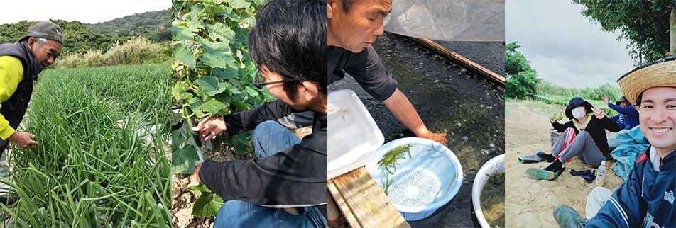 うるマルシェ通販|沖縄の食文化が分かる伝わる!地元農家の顔が見える!